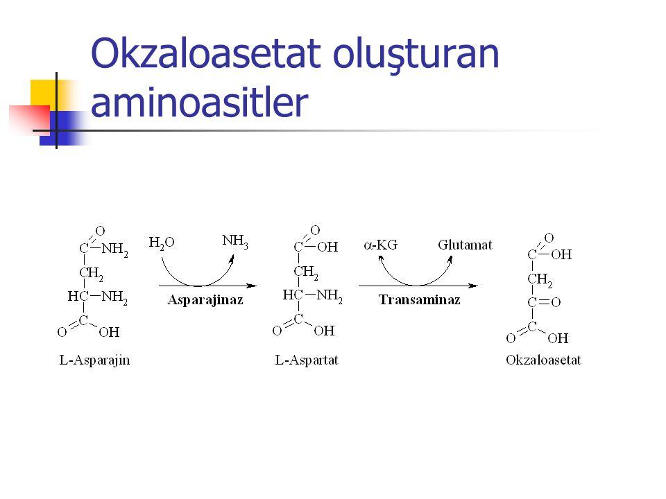 Okzaloasetat oluşturan aminoasitler