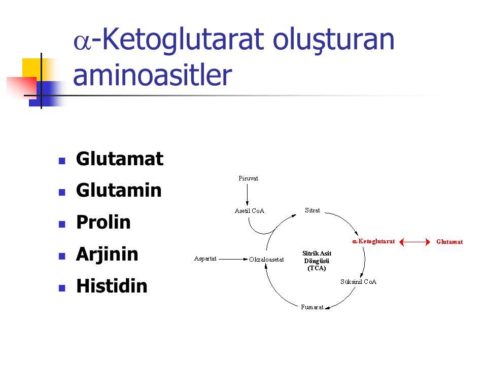  -Ketoglutarat oluşturan aminoasitler  Glutamat  Glutamin  Prolin  Arjinin  Histidin