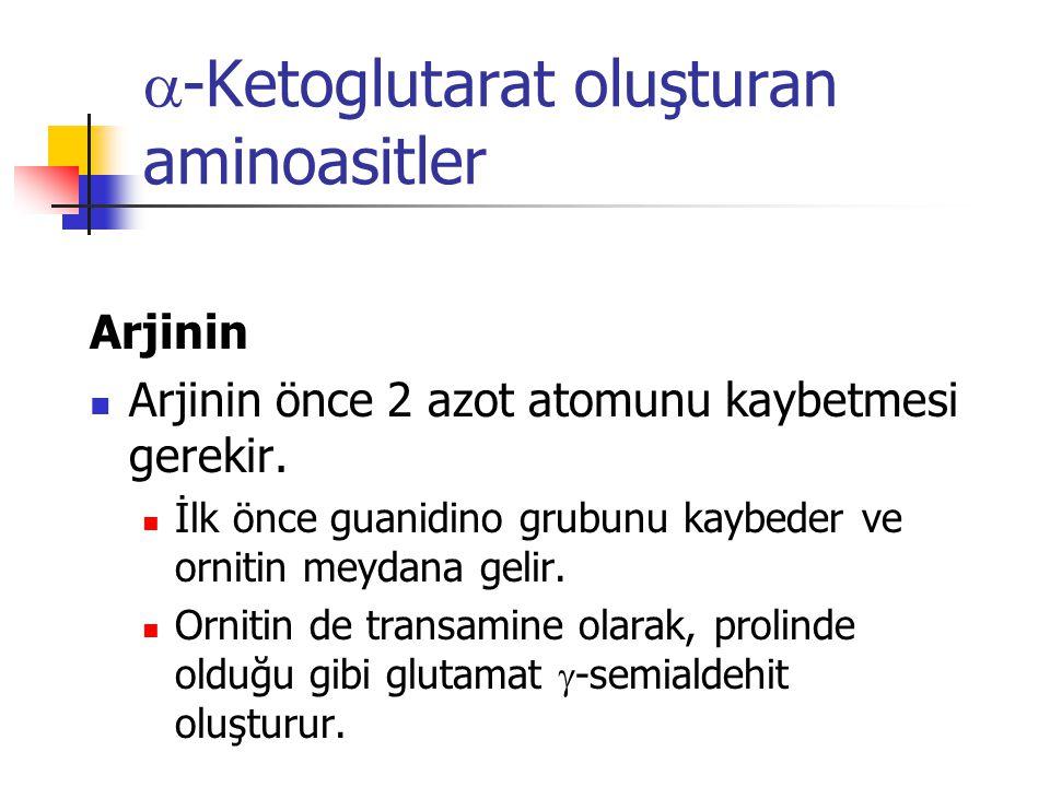  -Ketoglutarat oluşturan aminoasitler Arjinin  Arjinin önce 2 azot atomunu kaybetmesi gerekir.