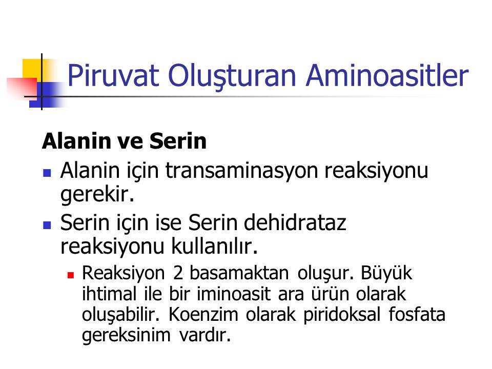 Piruvat Oluşturan Aminoasitler Alanin ve Serin  Alanin için transaminasyon reaksiyonu gerekir.