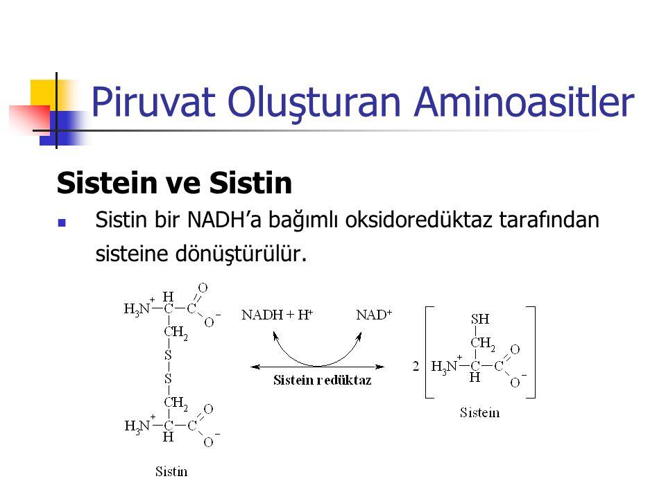 Piruvat Oluşturan Aminoasitler Sistein ve Sistin  Sistin bir NADH'a bağımlı oksidoredüktaz tarafından sisteine dönüştürülür.