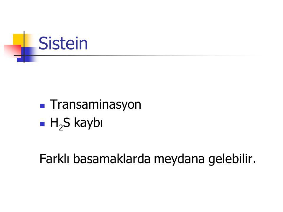 Sistein  Transaminasyon  H 2 S kaybı Farklı basamaklarda meydana gelebilir.