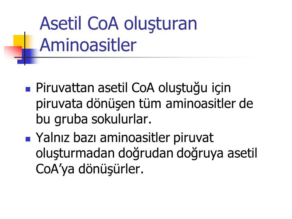 Asetil CoA oluşturan Aminoasitler  Piruvattan asetil CoA oluştuğu için piruvata dönüşen tüm aminoasitler de bu gruba sokulurlar.