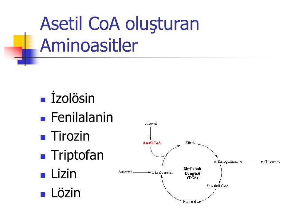Asetil CoA oluşturan Aminoasitler  İzolösin  Fenilalanin  Tirozin  Triptofan  Lizin  Lözin