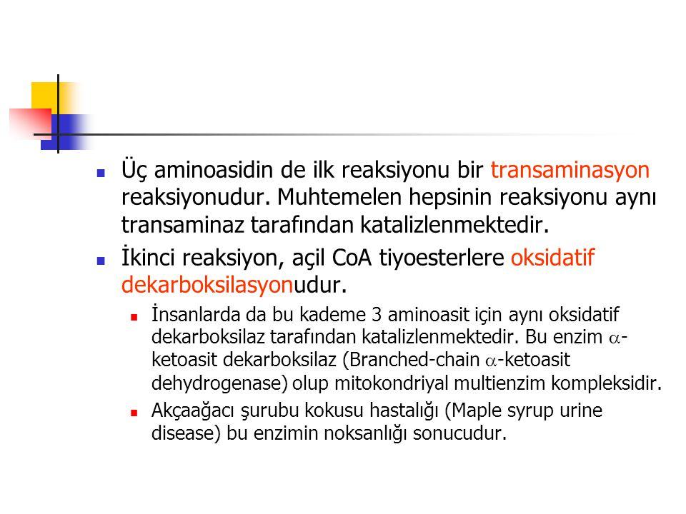  Üç aminoasidin de ilk reaksiyonu bir transaminasyon reaksiyonudur.