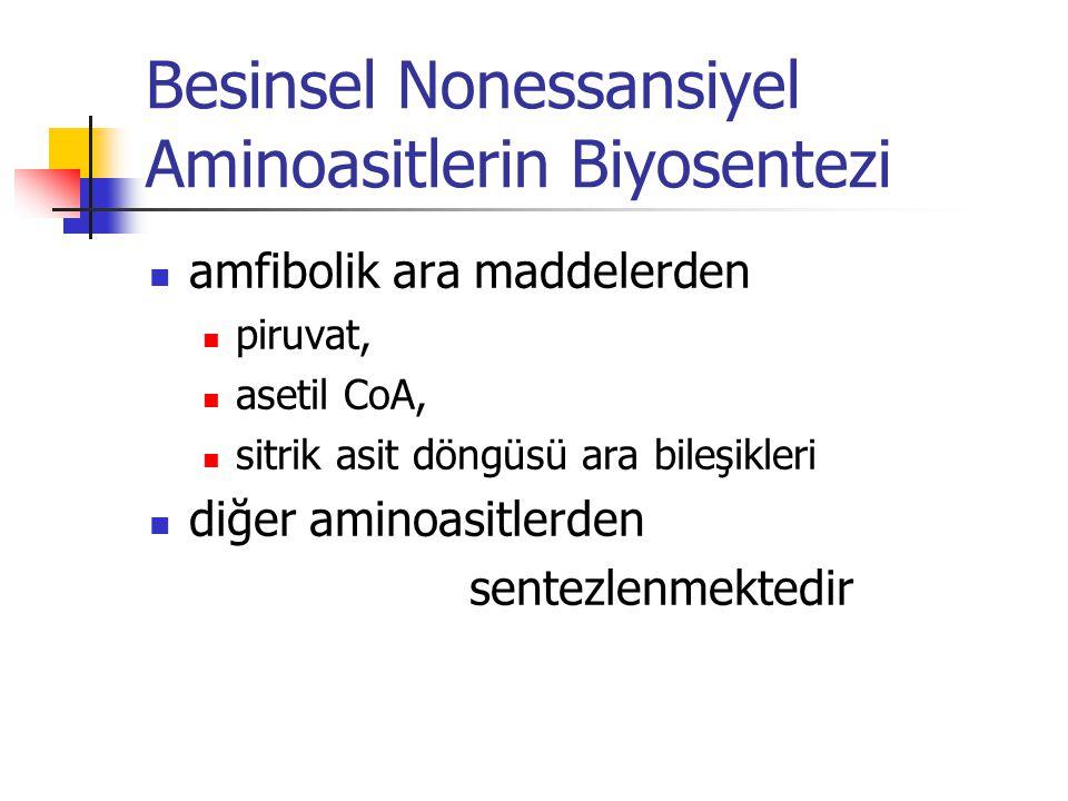 Besinsel Nonessansiyel Aminoasitlerin Biyosentezi  amfibolik ara maddelerden  piruvat,  asetil CoA,  sitrik asit döngüsü ara bileşikleri  diğer aminoasitlerden sentezlenmektedir