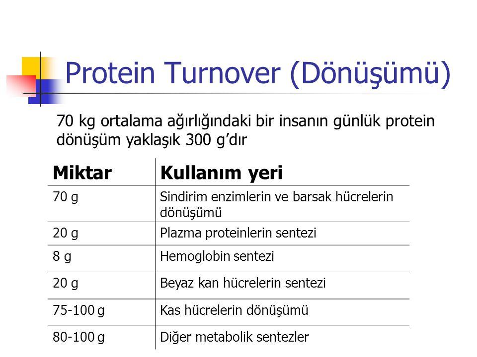 Protein Turnover (Dönüşümü) MiktarKullanım yeri 70 gSindirim enzimlerin ve barsak hücrelerin dönüşümü 20 gPlazma proteinlerin sentezi 8 gHemoglobin sentezi 20 gBeyaz kan hücrelerin sentezi 75-100 gKas hücrelerin dönüşümü 80-100 gDiğer metabolik sentezler 70 kg ortalama ağırlığındaki bir insanın günlük protein dönüşüm yaklaşık 300 g'dır