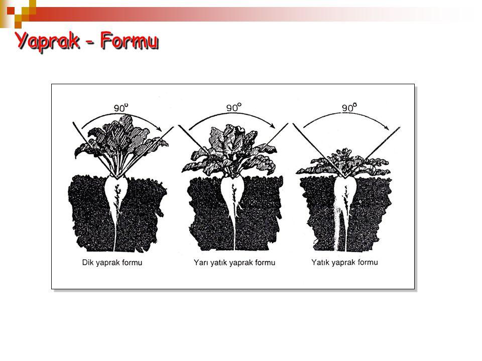 Yaprak - Formu