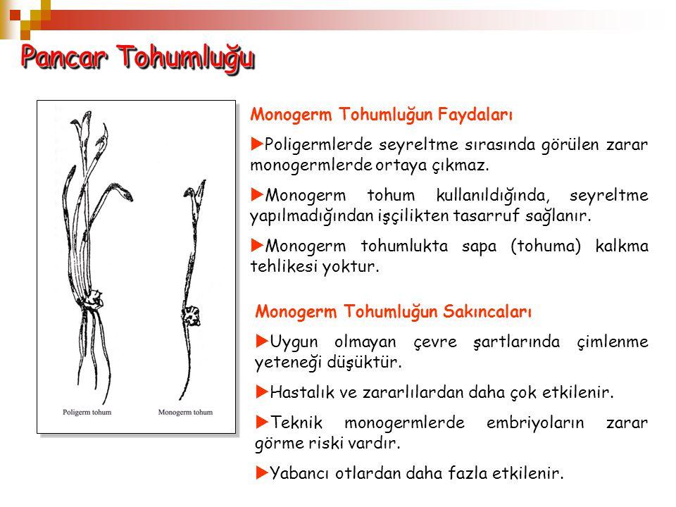 Pancar Tohumluğu Monogerm Tohumluğun Faydaları  Poligermlerde seyreltme sırasında görülen zarar monogermlerde ortaya çıkmaz.  Monogerm tohum kullanı