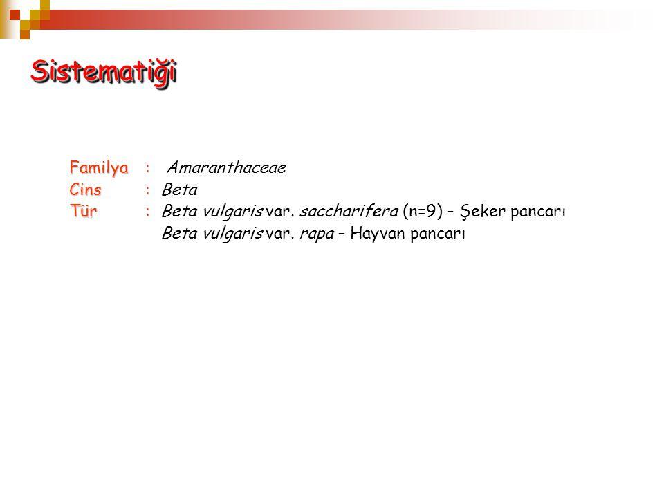 SistematiğiSistematiği Familya: Familya: Amaranthaceae Cins: Cins: Beta Tür: Tür: Beta vulgaris var. saccharifera (n=9) – Şeker pancarı Beta vulgaris