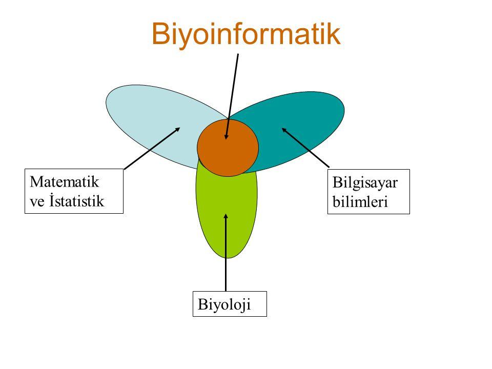 Biyoinformatik Matematik ve İstatistik Biyoloji Bilgisayar bilimleri
