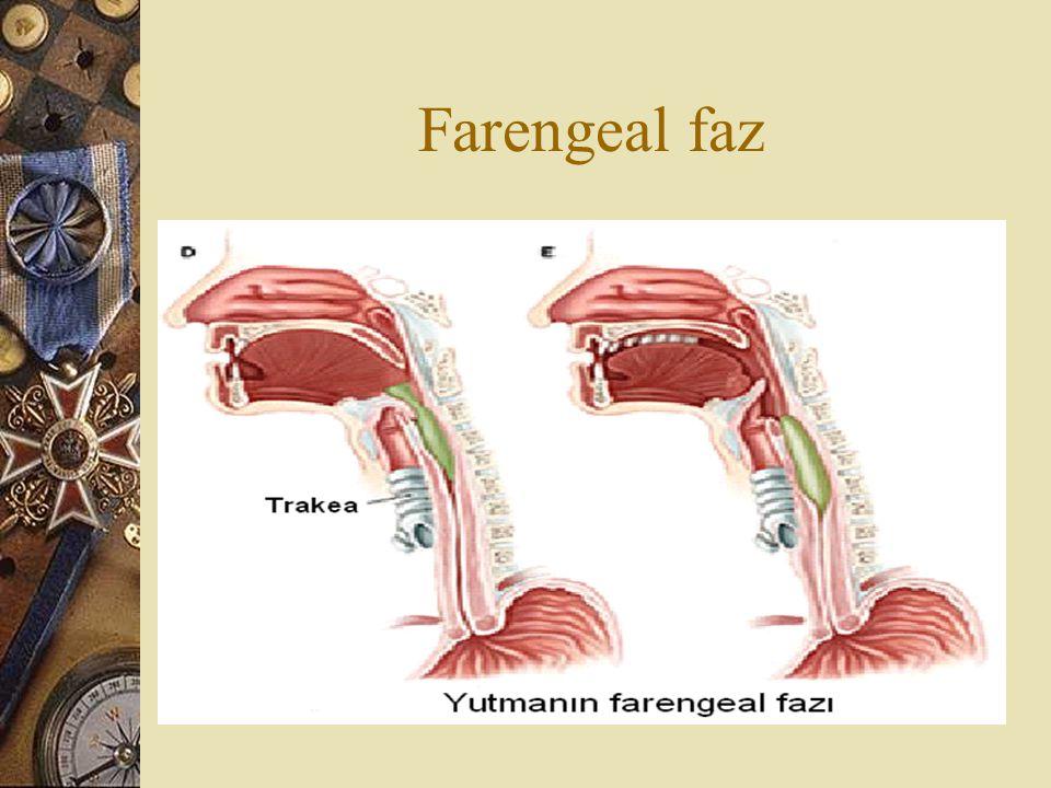 Farengeal faz
