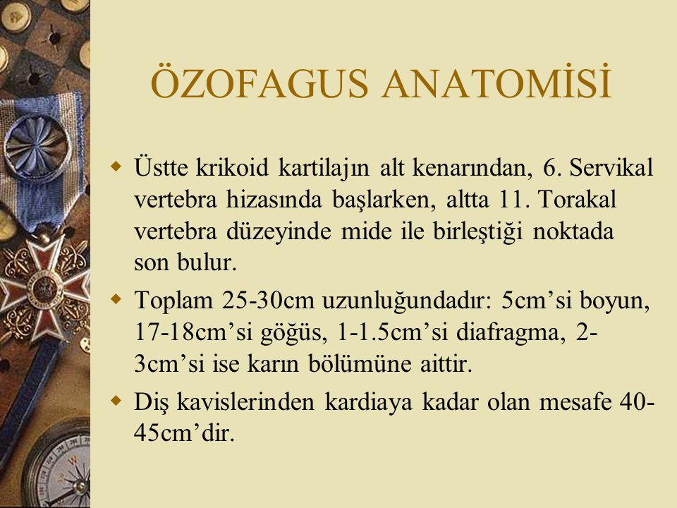 ÖZOFAGUS ANATOMİSİ  Özofagus istirahat halinde duvarları birbirleriyle temasta olup üç adet darlık gösterir.