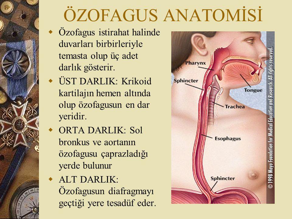 ÖZOFAGUS ANATOMİSİ  Üst 1/3'ü inferior tiroid arterden, orta 1/3'ü direkt torasik aortadan, 1/3 alt'ı A.