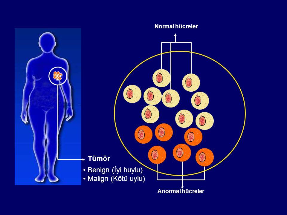 Malign vs Benign Malign TümörlerBenign Tümörler Normal dokuyu istila eder, sıkıştırır, tahrip eder Memedeki kitlelerin %80'ini oluşturur Hücreler yeni tümör oluşturmak için kitleden ayrılabilir İstila etmez veya yayılmaz Yaşamı tehdit ederYaşamı tehdit etmez