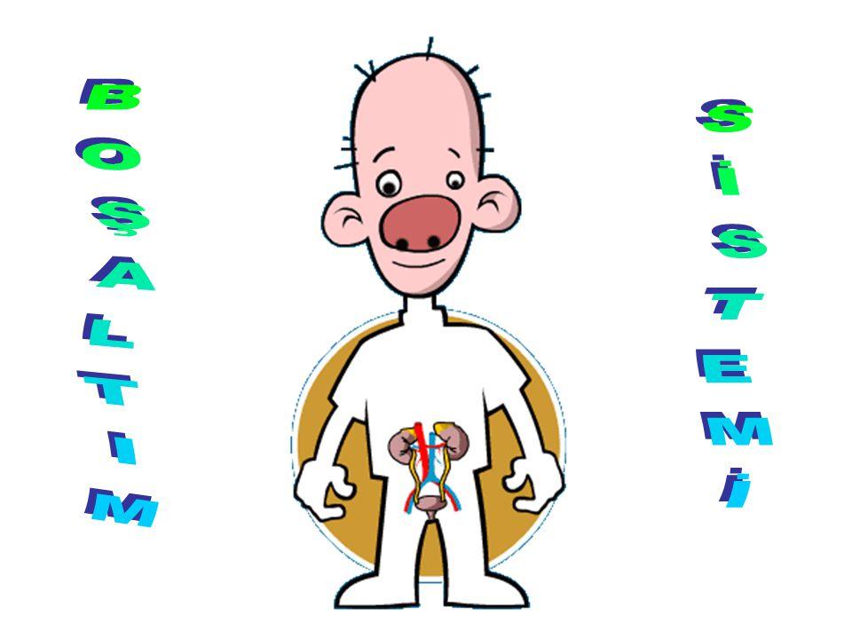 Böbrek atardamar Böbrek toplardamar İdrar aminoasitVar Yok Yağ asidiVar Yok GliserolVar Yok VitaminVar MineralVar SuVar ÜreVarYokVar GlikozVar Yok Ürik asitVarYokvar
