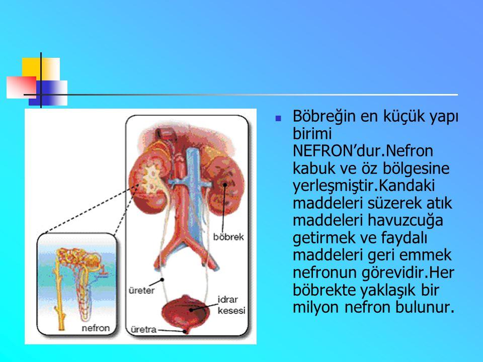  Böbreğin dışını saran zar böbreği dış etkilerden korur.  KABUK:Kandaki atık maddelerin süzüldüğü bölümdür.  ÖZBÖLGESİ:Atık maddelerin havuzcuğa ta