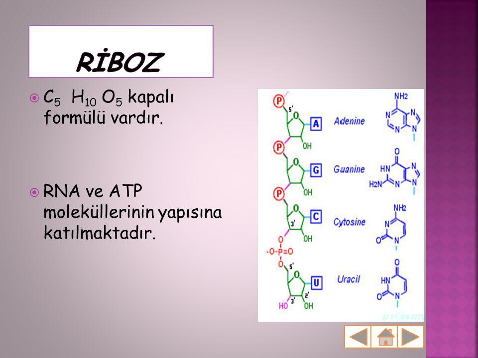  C 5 H 10 O 5 kapalı formülü vardır.  RNA ve ATP moleküllerinin yapısına katılmaktadır.