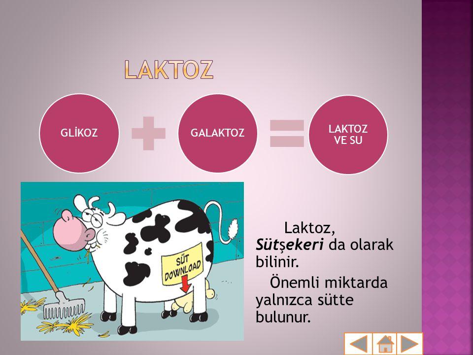 Laktoz, Sütşekeri da olarak bilinir. Önemli miktarda yalnızca sütte bulunur. GLİKOZGALAKTOZ LAKTOZ VE SU