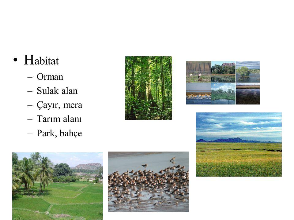 •H abitat –Orman –Sulak alan –Çayır, mera –Tarım alanı –Park, bahçe
