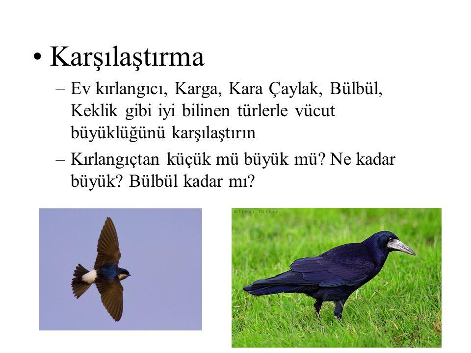 •Karşılaştırma –Ev kırlangıcı, Karga, Kara Çaylak, Bülbül, Keklik gibi iyi bilinen türlerle vücut büyüklüğünü karşılaştırın –Kırlangıçtan küçük mü büy