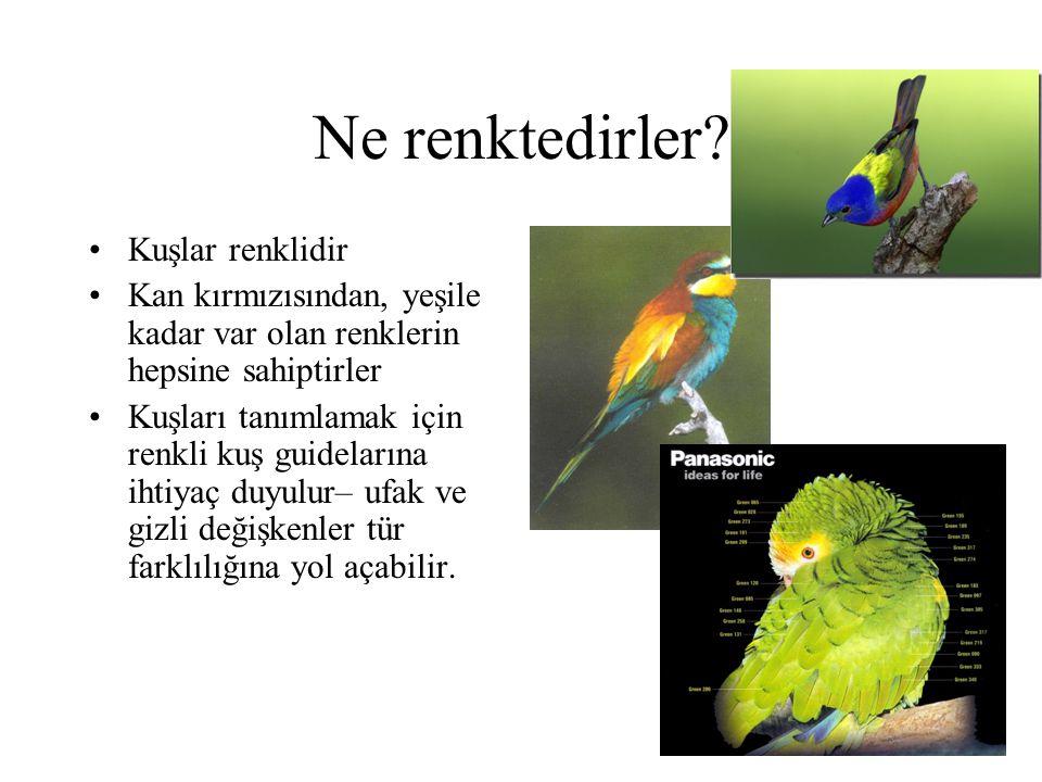 Ne renktedirler? •Kuşlar renklidir •Kan kırmızısından, yeşile kadar var olan renklerin hepsine sahiptirler •Kuşları tanımlamak için renkli kuş guidela