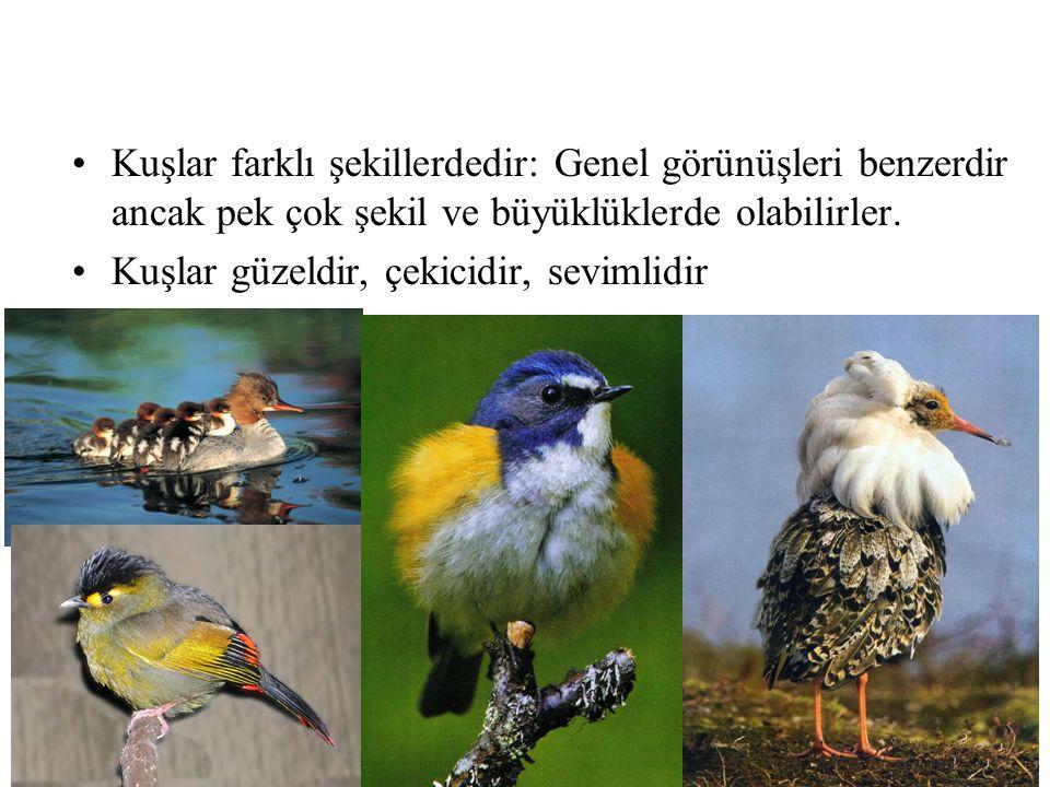 •Kuşlar farklı şekillerdedir: Genel görünüşleri benzerdir ancak pek çok şekil ve büyüklüklerde olabilirler. •Kuşlar güzeldir, çekicidir, sevimlidir