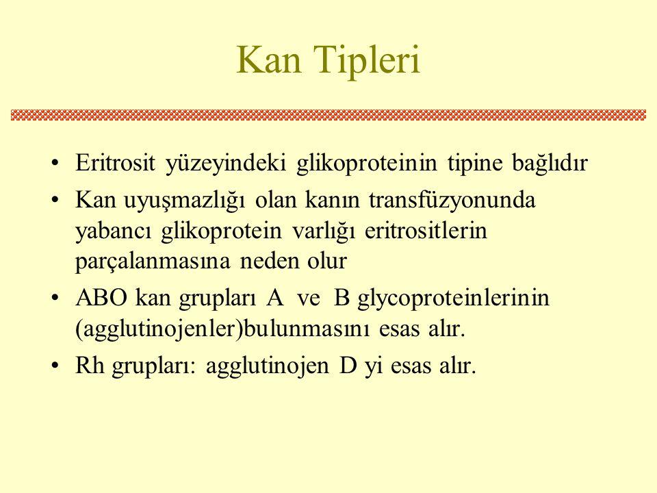 Kan Tipleri •Eritrosit yüzeyindeki glikoproteinin tipine bağlıdır •Kan uyuşmazlığı olan kanın transfüzyonunda yabancı glikoprotein varlığı eritrositlerin parçalanmasına neden olur •ABO kan grupları A ve B glycoproteinlerinin (agglutinojenler)bulunmasını esas alır.