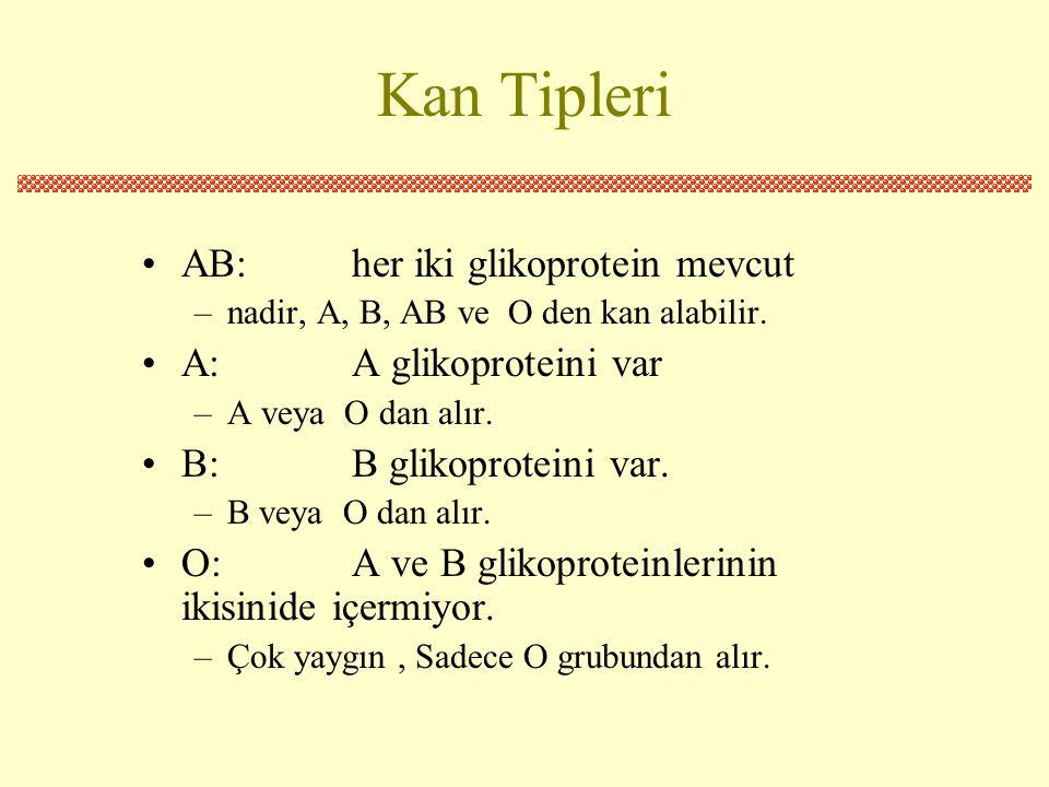 Kan Tipleri •AB:her iki glikoprotein mevcut –nadir, A, B, AB ve O den kan alabilir.
