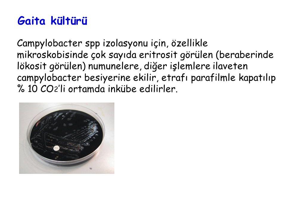 Gaita kültürü Campylobacter spp izolasyonu için, özellikle mikroskobisinde çok sayıda eritrosit görülen (beraberinde lökosit görülen) numunelere, diğer işlemlere ilaveten campylobacter besiyerine ekilir, etrafı parafilmle kapatılıp % 10 CO 2 'li ortamda inkübe edilirler.