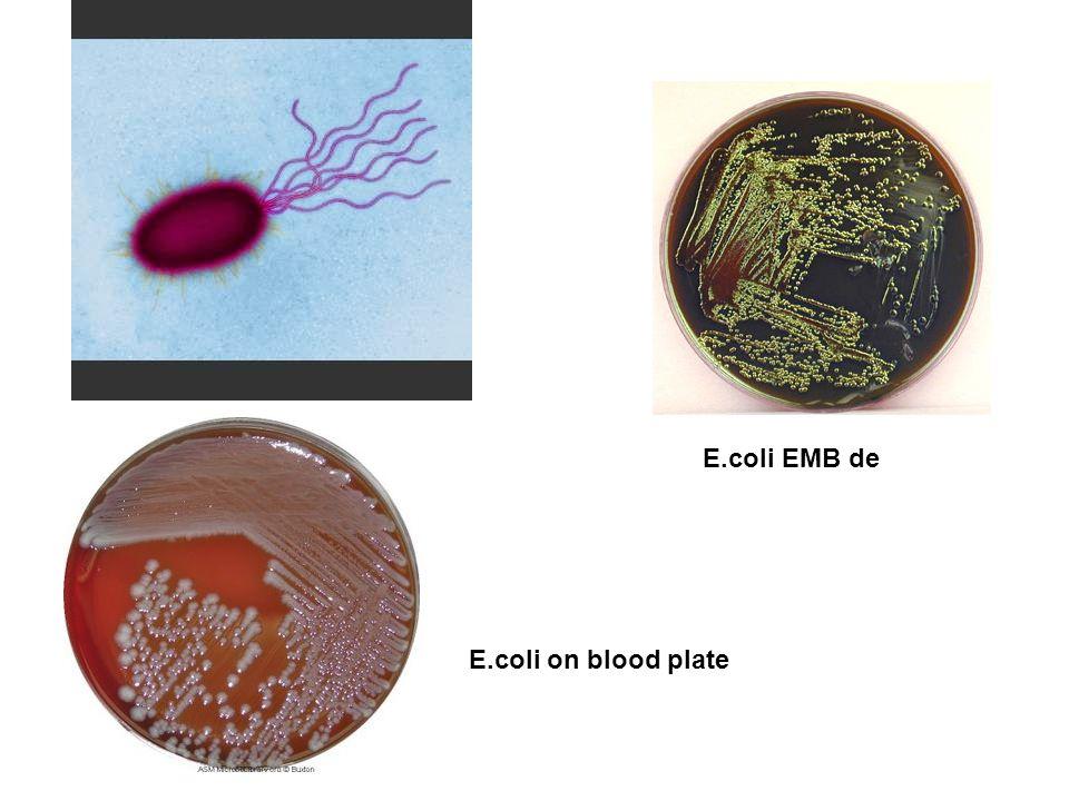 E.coli on blood plate E.coli EMB de