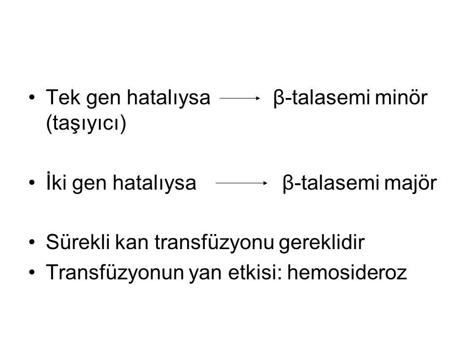 •Tek gen hatalıysa β-talasemi minör (taşıyıcı) •İki gen hatalıysa β-talasemi majör •Sürekli kan transfüzyonu gereklidir •Transfüzyonun yan etkisi: hem