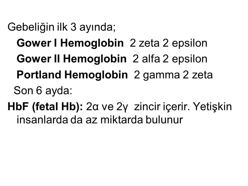 Gebeliğin ilk 3 ayında; Gower I Hemoglobin 2 zeta 2 epsilon Gower II Hemoglobin 2 alfa 2 epsilon Portland Hemoglobin 2 gamma 2 zeta Son 6 ayda: HbF (f