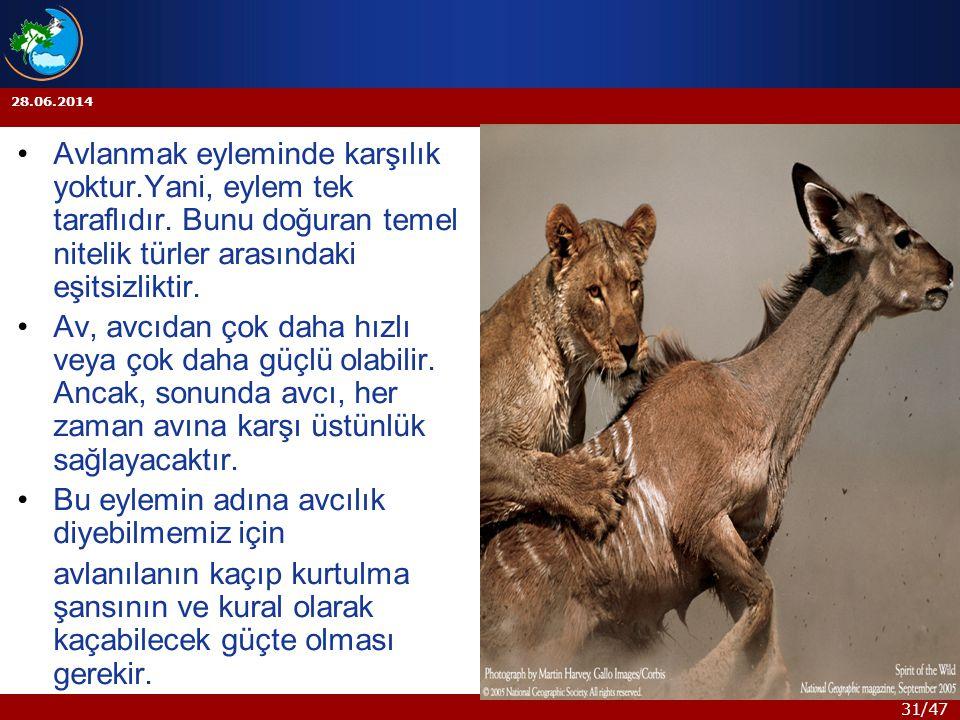 31/47 28.06.2014 •Avlanmak eyleminde karşılık yoktur.Yani, eylem tek taraflıdır. Bunu doğuran temel nitelik türler arasındaki eşitsizliktir. •Av, avcı