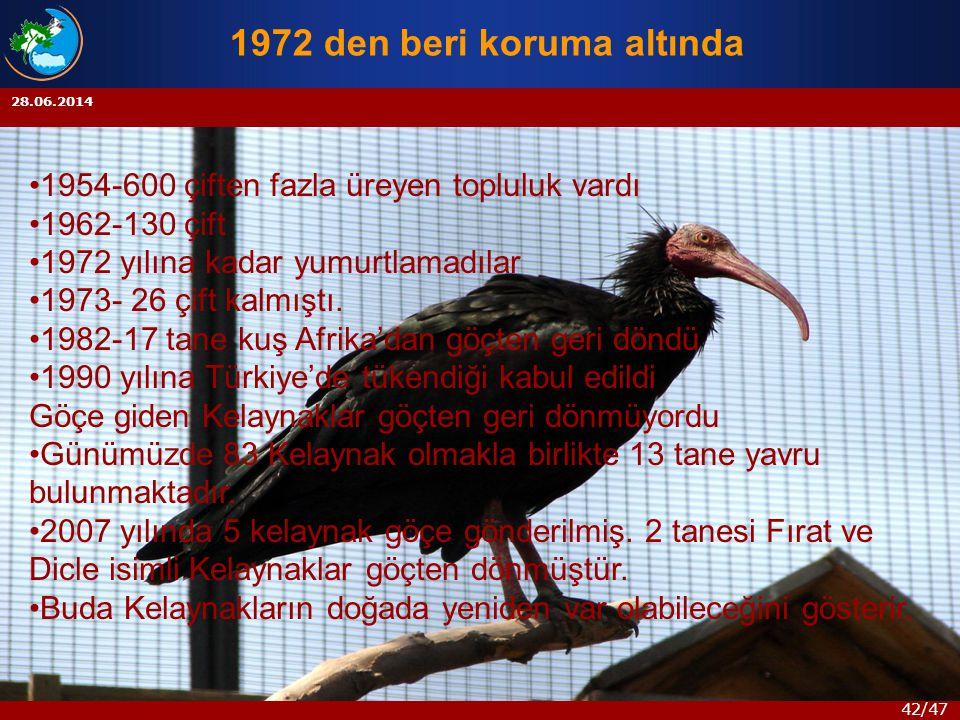 42/47 28.06.2014 1972 den beri koruma altında •1954-600 çiften fazla üreyen topluluk vardı •1962-130 çift •1972 yılına kadar yumurtlamadılar •1973- 26