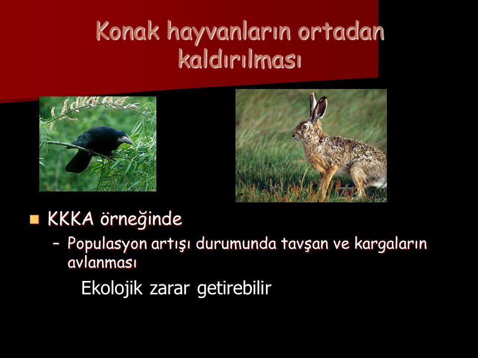 Konak hayvanların ortadan kaldırılması  KKKA örneğinde –Populasyon artışı durumunda tavşan ve kargaların avlanması Ekolojik zarar getirebilir