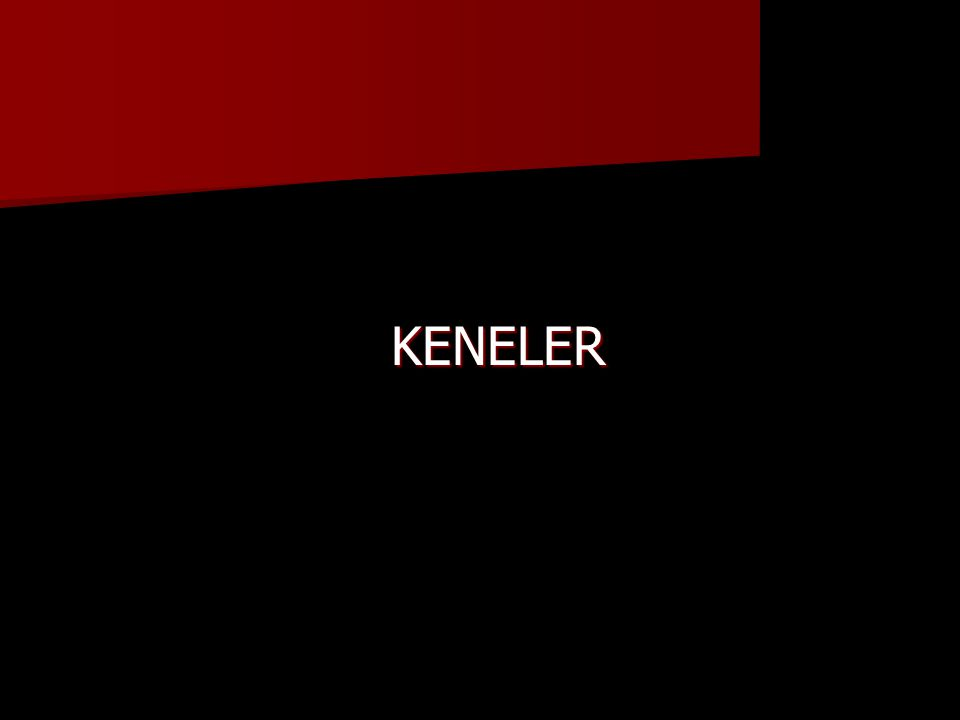 KENELER KENELER