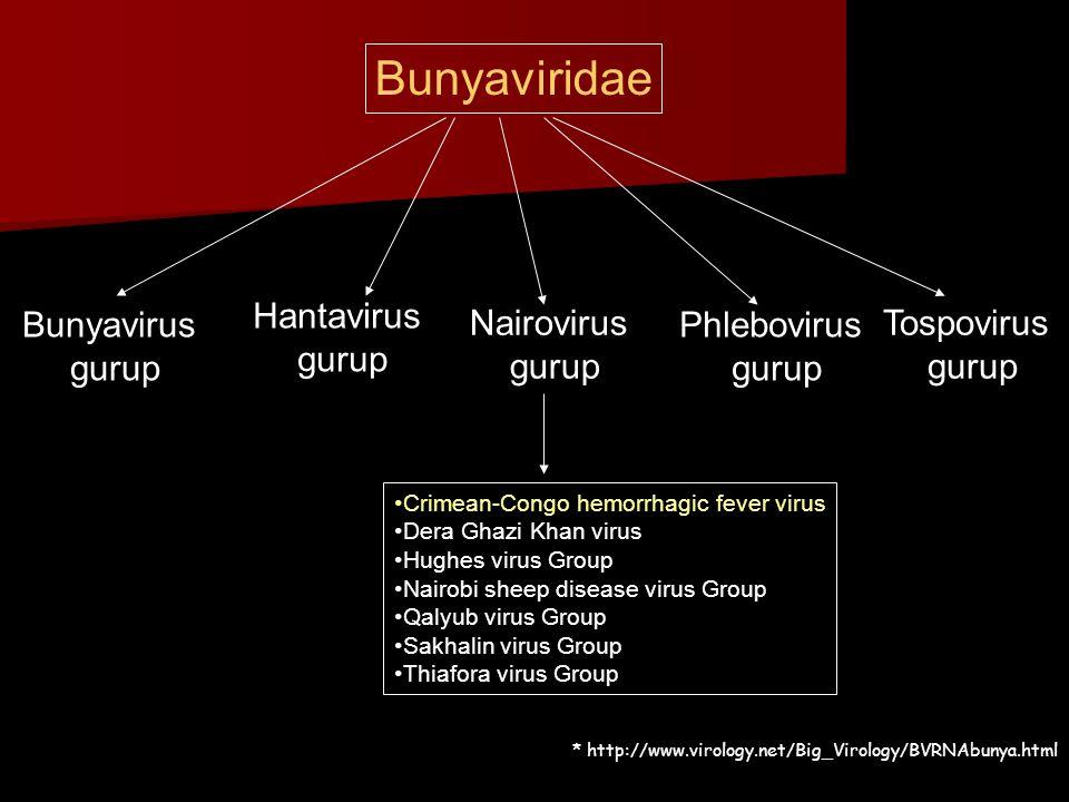 Bunyaviridae Bunyavirus gurup Hantavirus gurup Nairovirus gurup Phlebovirus gurup Tospovirus gurup •Crimean-Congo hemorrhagic fever virus •Dera Ghazi