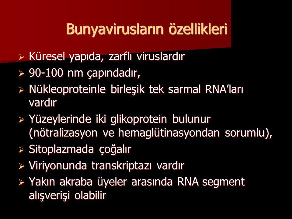 Bunyavirusların özellikleri  Küresel yapıda, zarflı viruslardır  90-100 nm çapındadır,  Nükleoproteinle birleşik tek sarmal RNA'ları vardır  Yüzey