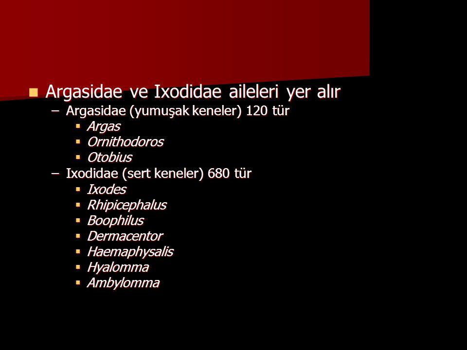  Argasidae ve Ixodidae aileleri yer alır –Argasidae (yumuşak keneler) 120 tür  Argas  Ornithodoros  Otobius –Ixodidae (sert keneler) 680 tür  Ixo