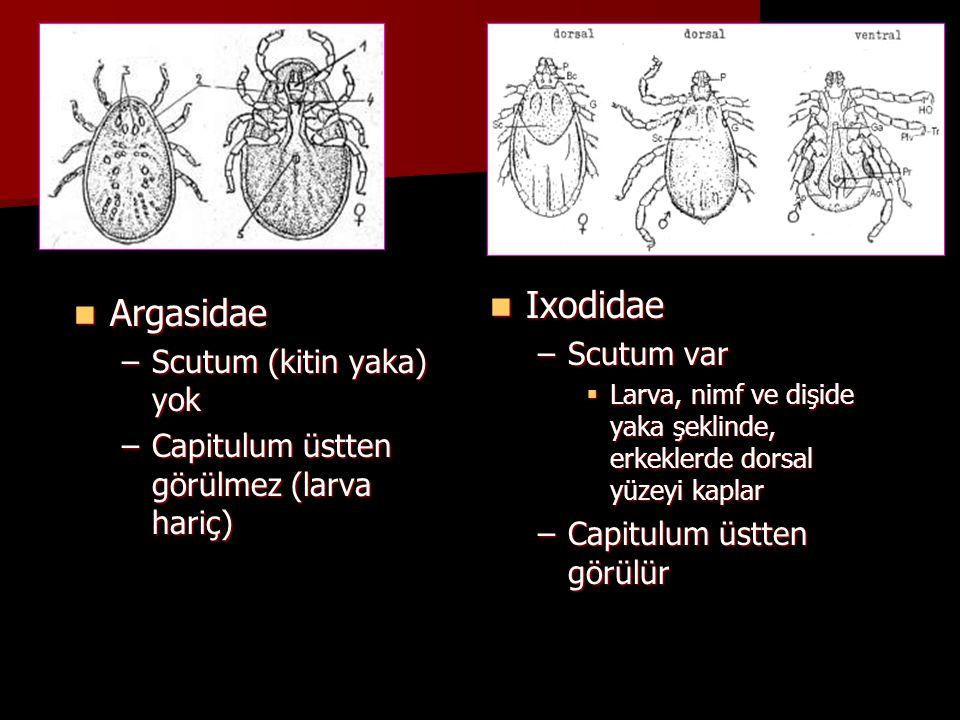 ARGASİDAEIXODIDAE Çok-konutlu kenelerdir Bir, iki veya üç konutlu özellik gösterirler Kısa sürelerle defalarca kan emerler Her gelişme dönemi doyana kadar kan emer ve gömlek değiştirip bir sonraki aşamaya geçer Dişiler defalarca az sayıda yumurtlar Dişiler yumurtladıktan sonra ölür (2000-15000) 2-7 nimf aşaması var Bir nimf aşaması var