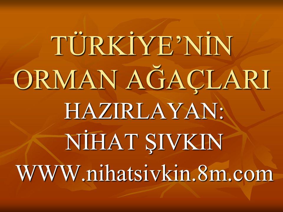 TÜRKİYE'NİN ORMAN AĞAÇLARI HAZIRLAYAN: NİHAT ŞIVKIN WWW.nihatsivkin.8m.com