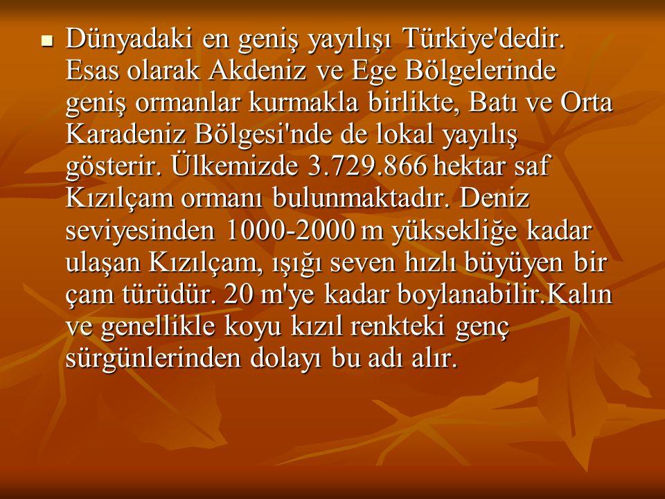  Dünyadaki en geniş yayılışı Türkiye dedir.