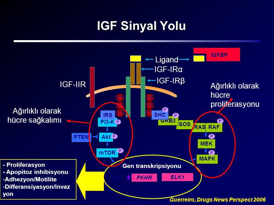 IGF Sinyal Yolu Guerreiro, Drugs News Perspect 2006 Ligand PI3-K RASRAF SOS GRB2 PTEN Akt MEK MAPK P P ATP SHC P P P P IRS IGFBP IGF-IRα IGF-IRβ Gen t