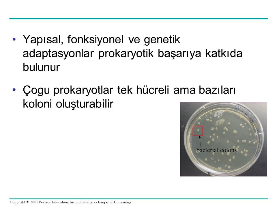 Copyright © 2005 Pearson Education, Inc. publishing as Benjamin Cummings •Yapısal, fonksiyonel ve genetik adaptasyonlar prokaryotik başarıya katkıda b