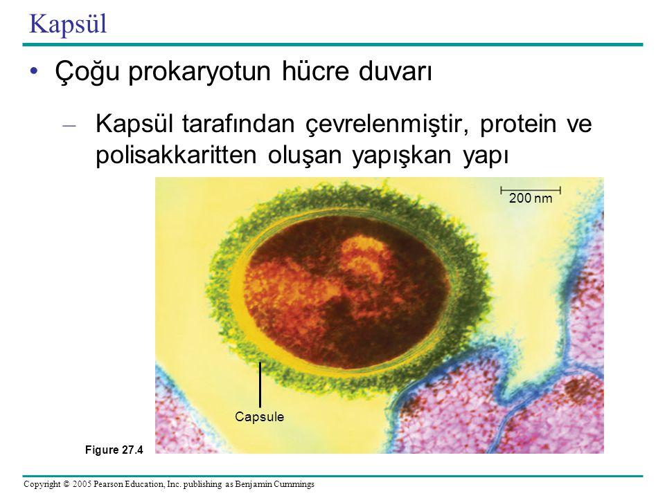 Copyright © 2005 Pearson Education, Inc. publishing as Benjamin Cummings Kapsül •Çoğu prokaryotun hücre duvarı – Kapsül tarafından çevrelenmiştir, pro