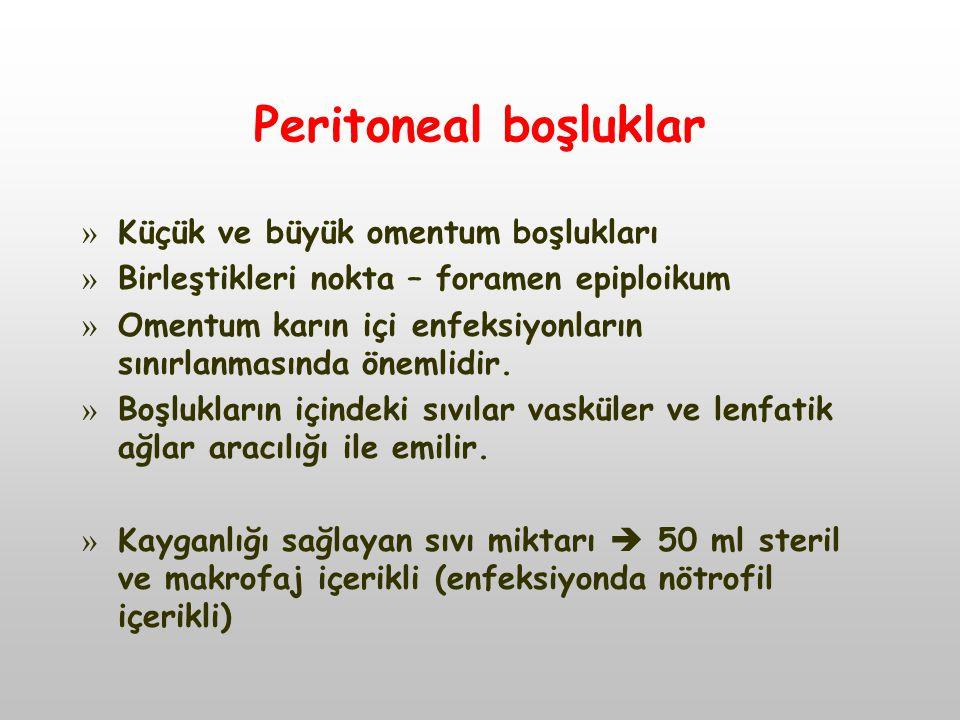 Peritoneal boşluklar » Küçük ve büyük omentum boşlukları » Birleştikleri nokta – foramen epiploikum » Omentum karın içi enfeksiyonların sınırlanmasında önemlidir.