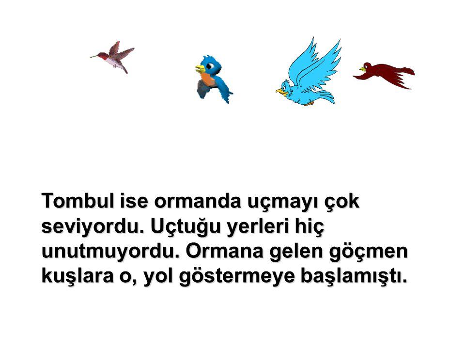 Tombul ise ormanda uçmayı çok seviyordu. Uçtuğu yerleri hiç unutmuyordu. Ormana gelen göçmen kuşlara o, yol göstermeye başlamıştı.
