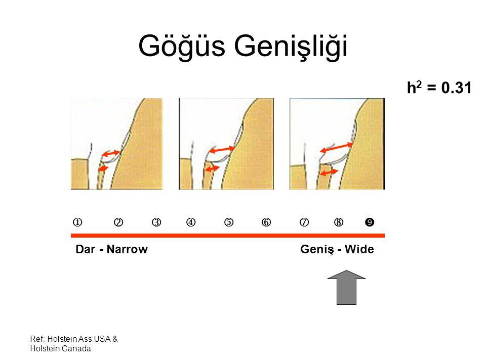 Ref: Holstein Ass USA & Holstein Canada Göğüs Genişliği h 2 = 0.31          Dar - Narrow Geniş - Wide