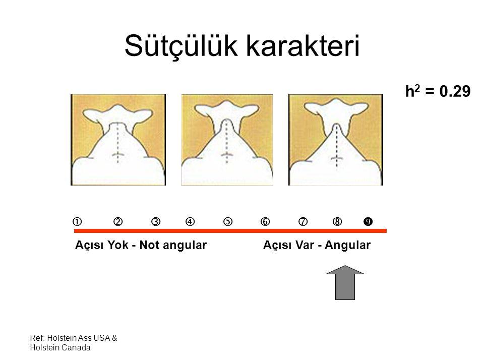 Ref: Holstein Ass USA & Holstein Canada Sütçülük karakteri h 2 = 0.29          Açısı Yok - Not angular Açısı Var - Angular